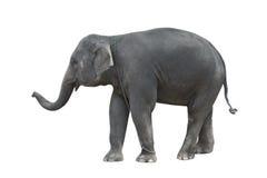 положение слона Стоковое Изображение RF