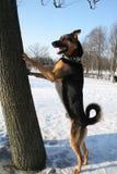 положение собаки Стоковые Фотографии RF