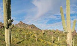 положение picacho парка пиковое стоковое изображение rf