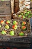 положенные в коробку яблоки Стоковая Фотография RF