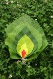 положенный в постель зеленый цвет Стоковые Фотографии RF