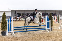 Полоса препятствий и parkour лошади Стоковая Фотография