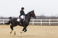 Полоса препятствий и parkour лошади Стоковые Фото