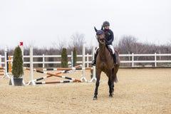 Полоса препятствий и parkour лошади Стоковые Фотографии RF