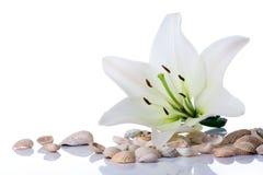 полотенце спы раковины моря цветка Стоковые Фото
