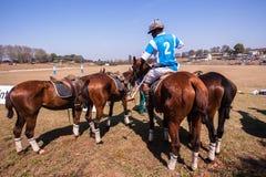 Поло заземляет лошадей Shongweni Hillcrest всадников Стоковые Фото