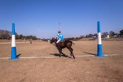 Поло заземляет лошадей Shongweni Hillcrest всадников Стоковая Фотография