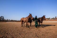 Поло заземляет лошадей Shongweni Hillcrest Grooms Стоковые Изображения