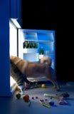 полуночная заедк Стоковое фото RF