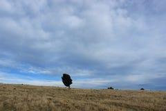 Полуостров банков вне Крайстчёрча, Новой Зеландии Стоковая Фотография RF