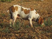 Получившаяся отказ женская собака в поле стоковые изображения