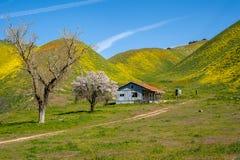 Получившаяся отказ лачуга около национального монумента Carrizo простого, во время superbloom Калифорния весны wildflowers на сол стоковое фото
