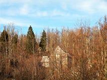 Получившийся отказ старый дом спрятанный среди деревьев спруса и бука, идиллии леса unspoiled природы стоковые изображения rf