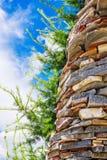 Польза лиственницы в дизайне ландшафта Стоковое Фото