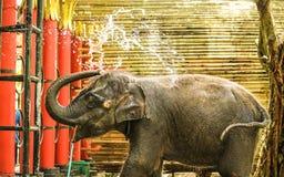 польза слона младенца его вода выплеска хобота во время купать на зоопарке стоковые фото