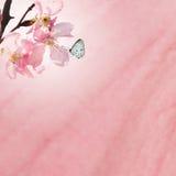 польза текстуры sakura предпосылки Стоковое Фото