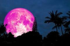 Польностью розовая луна над ладонью кокоса силуэта на лесе иллюстрация штока