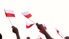 Польские патриоты развевая с флагами outdoors акции видеоматериалы