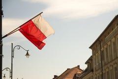 Польский флаг развевая на улице города стоковые изображения rf