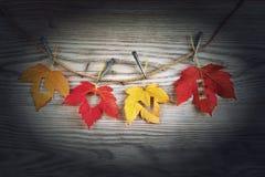 Полюбите сердца на цветастых листьях осени с деревянной предпосылкой Стоковая Фотография