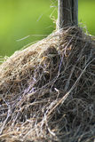 полюс сена Стоковые Фото