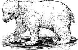 Полярный медведь Стоковая Фотография