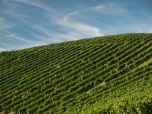Поля виноградины с голубым небом вал времени земной хлебоуборки сада яблока возмужалый стоковые изображения rf