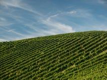 Поля виноградины с голубым небом вал времени земной хлебоуборки сада яблока возмужалый стоковые фотографии rf