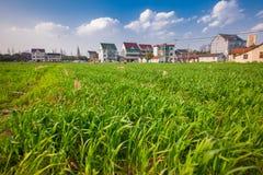 Поля в сельской местности южного Китая Стоковое Изображение RF