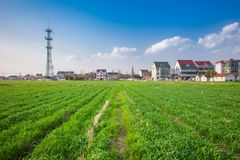 Поля в сельской местности южного Китая Стоковое фото RF