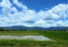 Поля в сельском Таиланде Взгляд зеленого поля в сезоне дождей стоковое фото rf