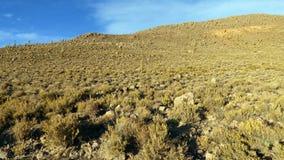 Поля в Altiplano Боливия, Южная Америка Стоковые Фотографии RF
