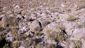 Поля в Altiplano Боливия, Южная Америка Стоковая Фотография