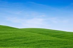 поля зеленая Тоскана Стоковое Фото