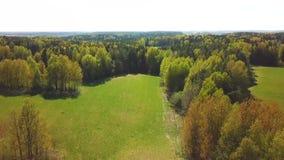 Поля зеленого цвета весны и вид с воздуха леса r Взгляд от трутня акции видеоматериалы