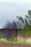 поля земледелия Стоковые Изображения