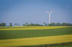 Поля зерна с ветрянкой в backround стоковые фото