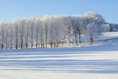 Поля и деревья в ландшафтах зимы Стоковое фото RF
