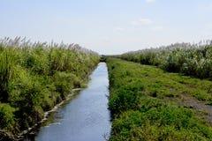 Поля и канал сахарного тростника стоковые фотографии rf