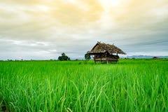 Поля и коттеджи риса Стоковые Фото