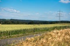 Поля и линия электропередач зерна в яркой погоде в природе Стоковое Изображение
