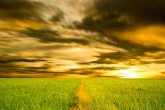 Поля и небо падиа. Стоковое Фото