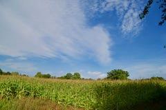 Поля и облака стоковые фотографии rf