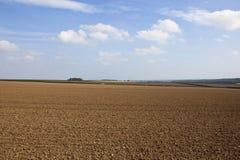 Поля культивируемые осенью Стоковые Фотографии RF