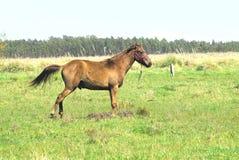 Поля лошади и выгона ландшафта стоковая фотография