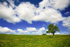 поля облаков засевают небо травой Стоковые Изображения