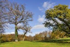 поля осени с тенями tress дуба трудными Стоковые Фото