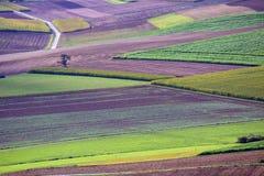 поля осени Стоковое фото RF