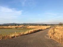 Поля осенью стоковая фотография rf