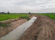 Поля полива и риса стоковая фотография